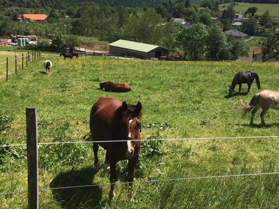 Goldenstone_Farm_Alland_Einstellbetrieb02