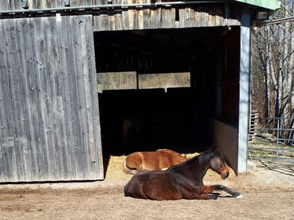 Goldenstone_Farm_Alland_Einstellbetrieb05