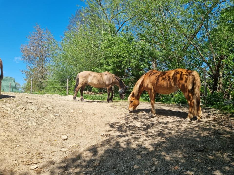 Goldenstone_Farm_Einstellbetrieb11