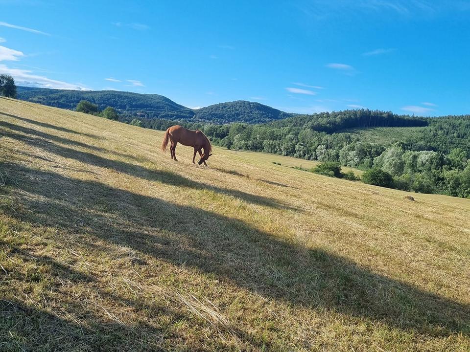 Goldenstone_Farm_Einstellbetrieb14