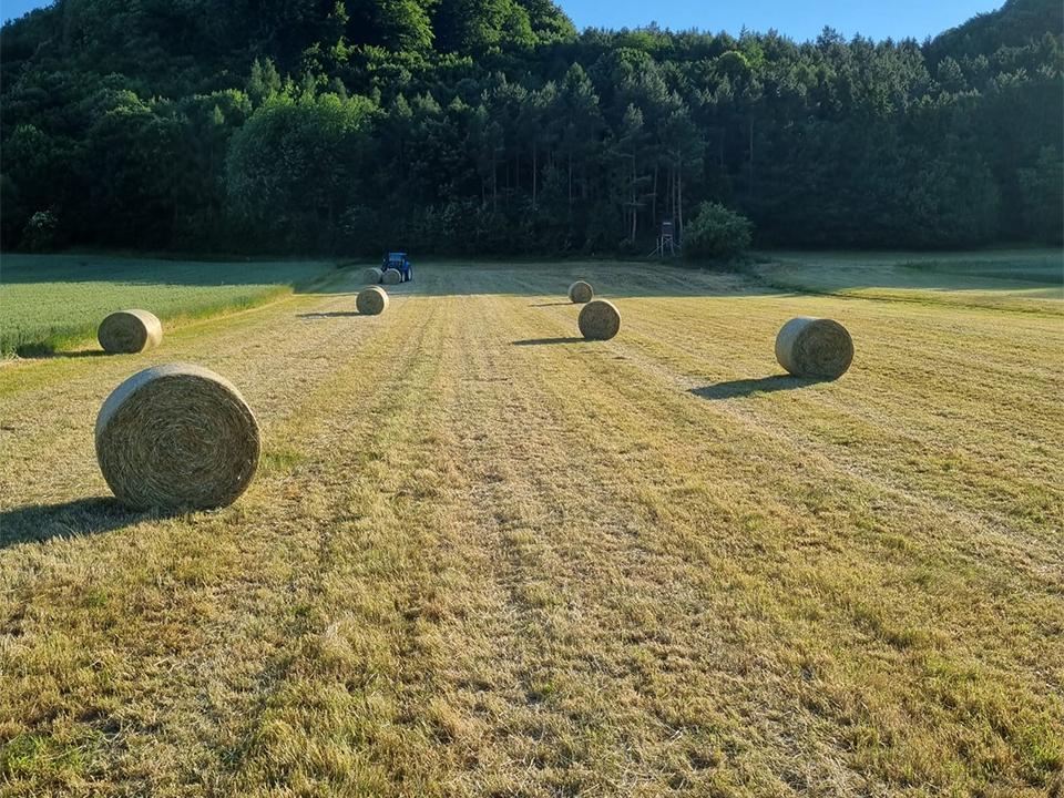 Goldenstone_Farm_Einstellbetrieb15